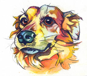 Gouache portrait of Melvin, a dog by BananazGorilla
