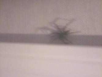 Spider by mrsbilliejean