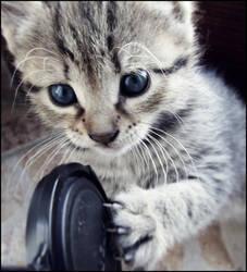 Kitten by jelenametalka