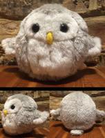 Little Owl by Haymurus