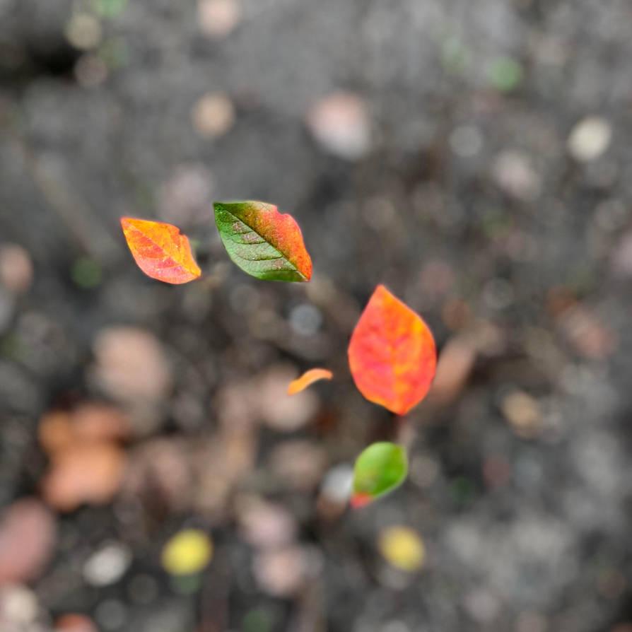 November by lnzie