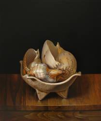 sea-shells by andrianart
