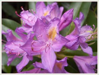 Flower by Elass