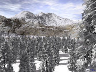 First Snow by crossbrace