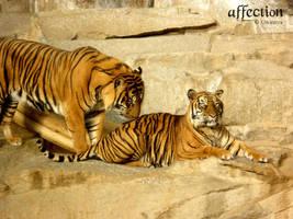 affection by gwinnya
