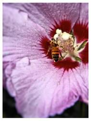 BEE still by rickster155