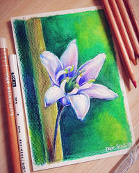Colour Pencils - Bluebell by N2Y88