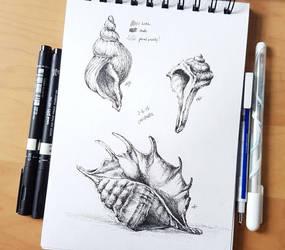 June 2 - Seashells by N2Y88