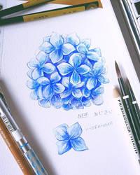 Watercolour: Hydrangeas by N2Y88