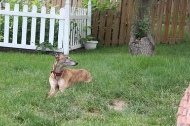 greyhound 7 by jettstock
