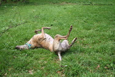 greyhound rolling 2 by jettstock