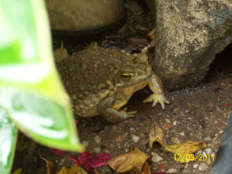 Toad Life. by Neko-Ara