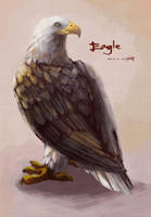 Eagle by amy30535