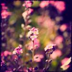 My secret garden by rigallise