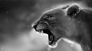 Lioness by Matou31