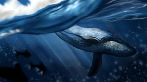 Whale study by Matou31