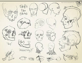 Skull Studies by CatCouch