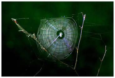 Web I by smells-like-an-angel