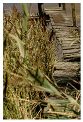 Boardwalk and Reeds by smells-like-an-angel