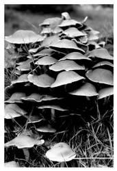 Mushrooms by smells-like-an-angel