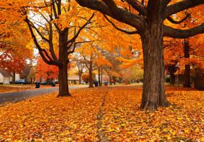 autumn walk by vi0letdreamer