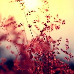 Memories of you. by incredi
