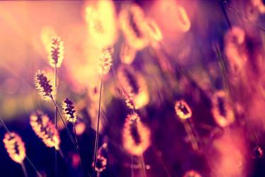 Sunset garden. by incredi