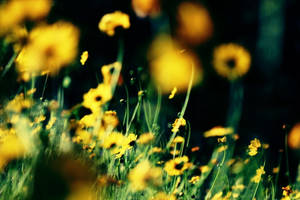 Yellow in the garden by incredi