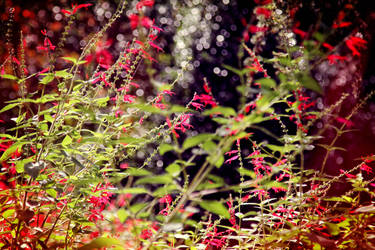 The Secret Garden by incredi