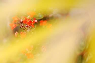 Yellowredyellow by nikismindriot