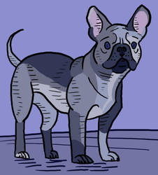 French Bulldog by jennyweatherup