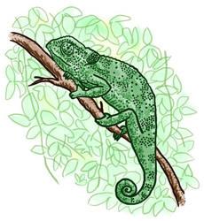 Chameleon by jennyweatherup