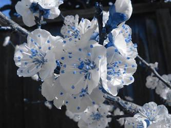 Flowers by TigerGod