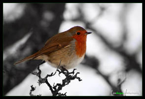 Winters Little Red Riding Hood by smdesign-photography