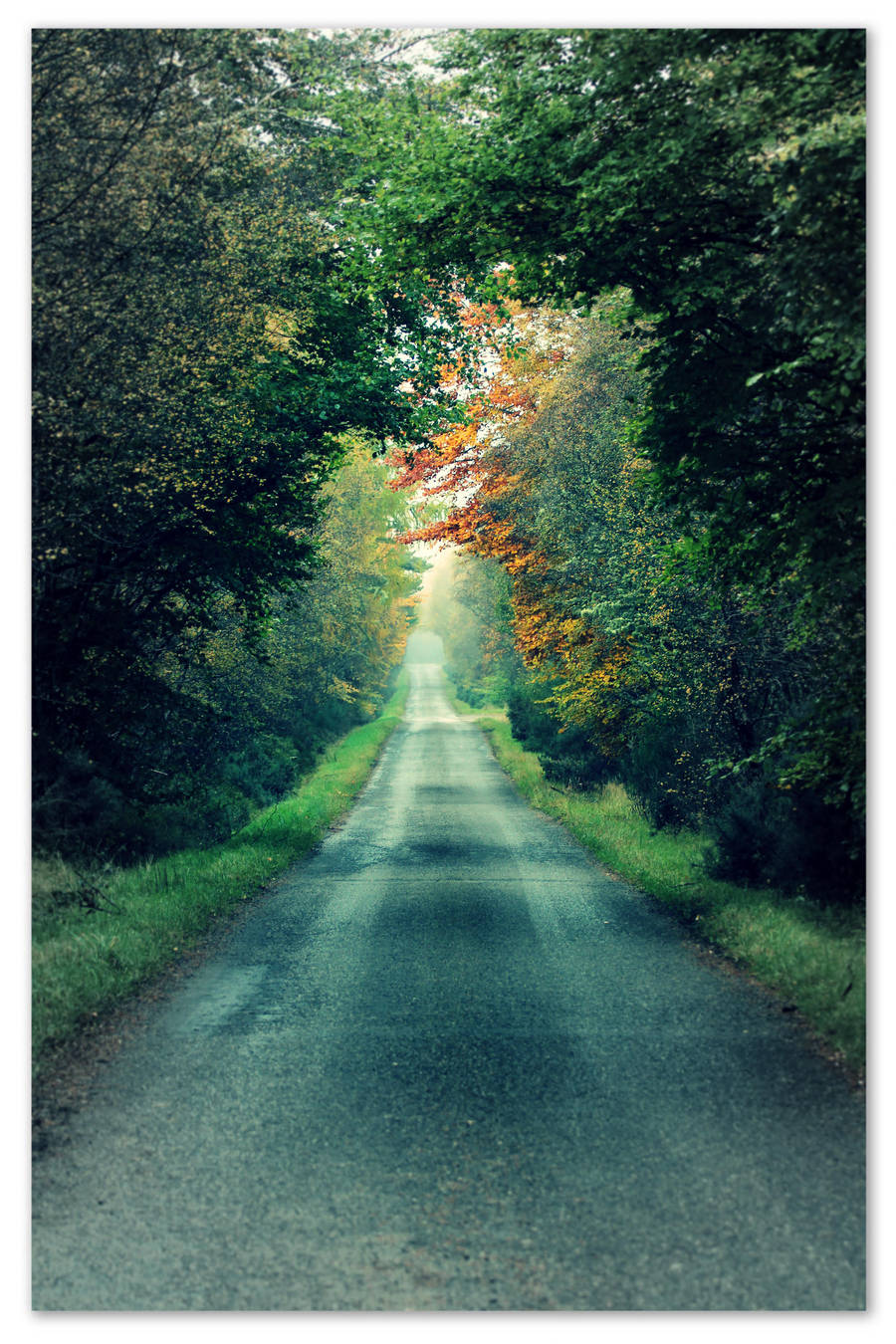 It's a long lonely road to nowhere in particular! by smdesign-photography