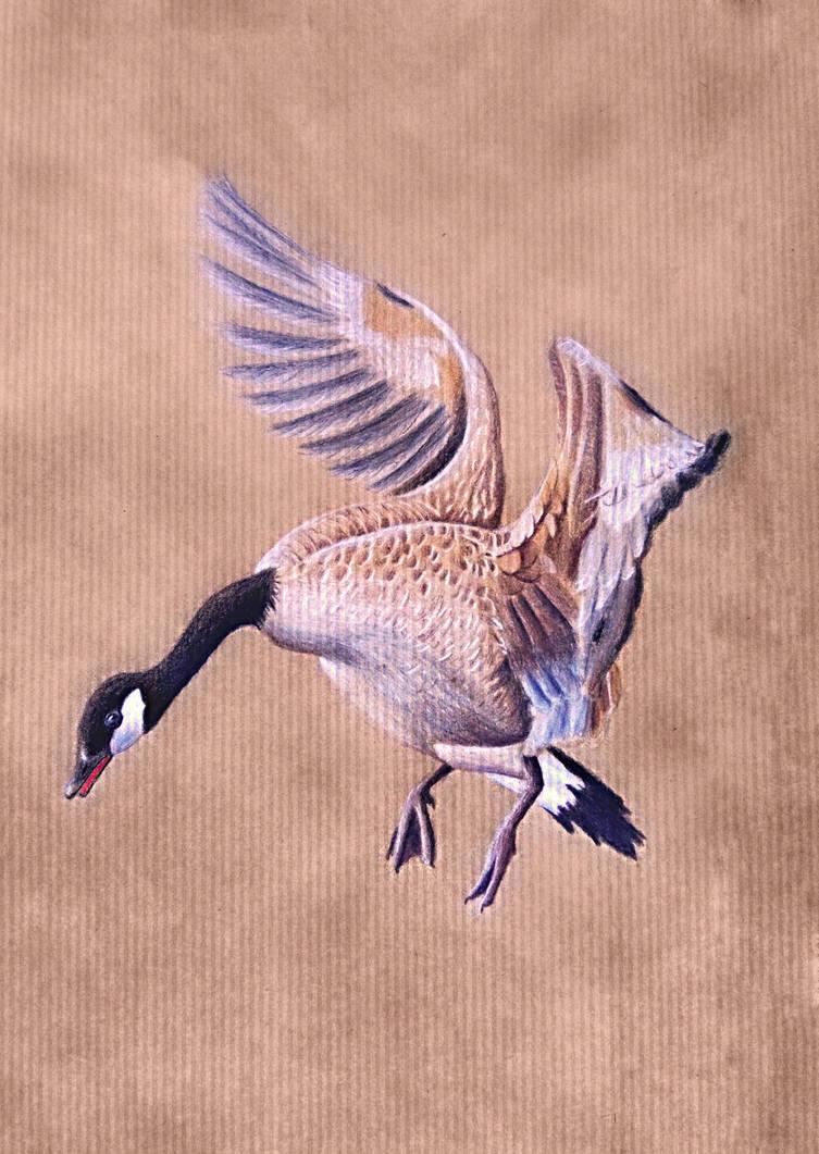 Wild Goose by carowi