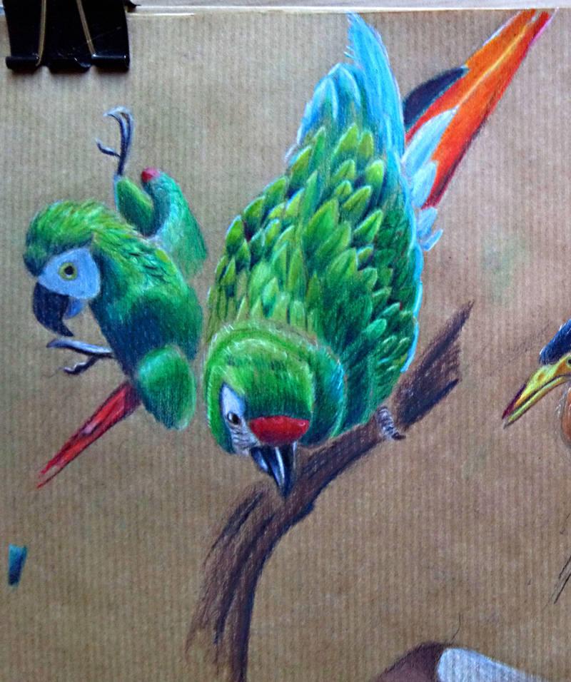 Macaws by carowi