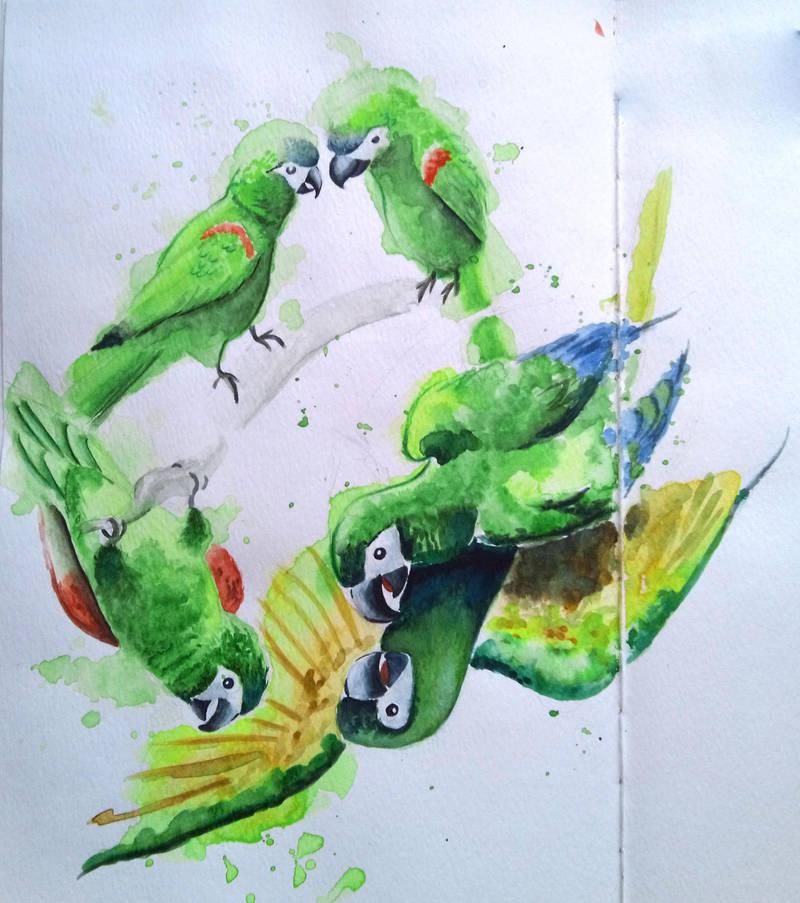 Green Macaws by carowi