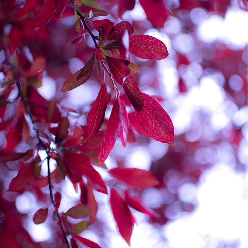 leaves whisper by orbitingasupernova