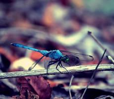 dragonfly by orbitingasupernova