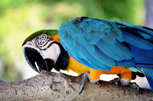 Macaw by orbitingasupernova