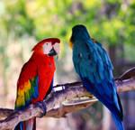 Macaws by orbitingasupernova