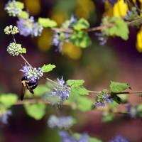Bee by orbitingasupernova