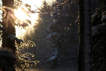 Snowy forest by Siluetti
