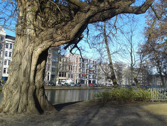 Amsterdam - old trees by JacobBakk