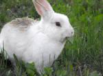 Das Bunny 04 by japookins