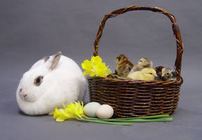 Easter stock 3 by InKi-Stock