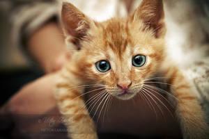 kitten1 by victorz82000