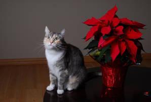 Kitty Kat by GothClaw123