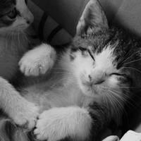 heyy, kitty kitty by dziafna